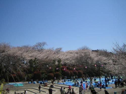 Sakura20123