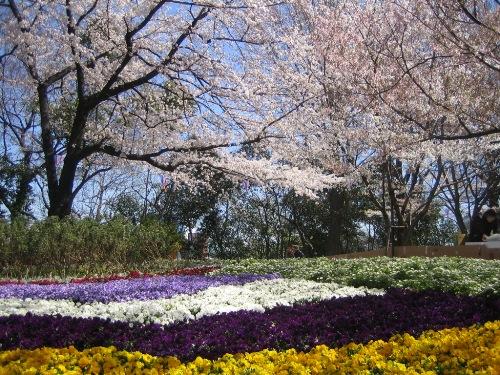 Sakura20125