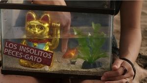 Tos_insolitos_peces_gato_4