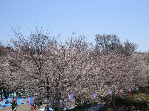 Sakura20124
