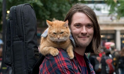 A_street_cat_named_bob_2