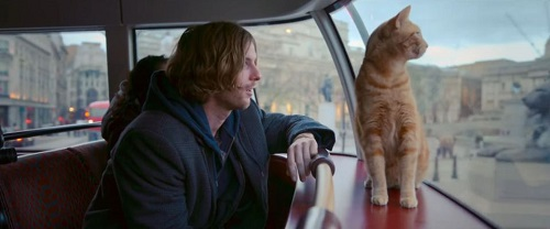 A_street_cat_named_bob_3